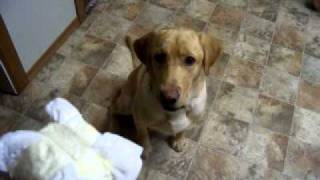 Training Red Dog Throws Away Diapers Part 2 Of 3