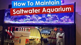 How To Maintain Saltwater Aquarium - Weekly maintenance on a 100g saltwater fish reef tank