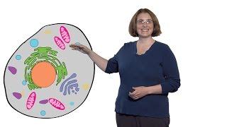 Margaret Gardel (U. Chicago): What is Cytoplasm?