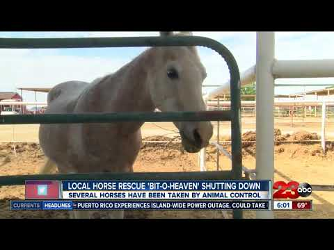 6 rescue horses need a new home