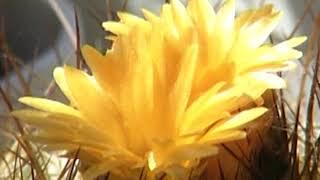 О кактусах. Предупредить болезни и появление вредителей