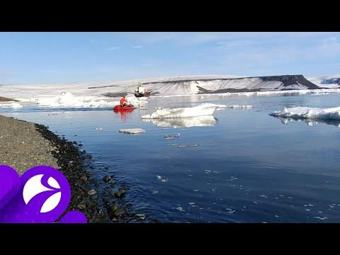 Ласточкам приглянулась Арктика