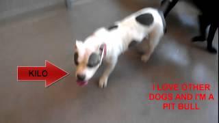 -43 °c Indoor Dog Playgroup At The Edmonton Humane Society.