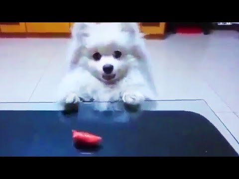 Funny Dogs  🐶Pet Dogs Being Funny and Cute (Part 1) [Funny Pets]