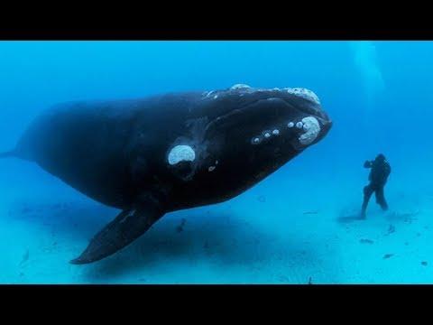 Dieser Wal ließ den Taucher nicht gehen. Als sie erkannte, warum, war sie schockiert!