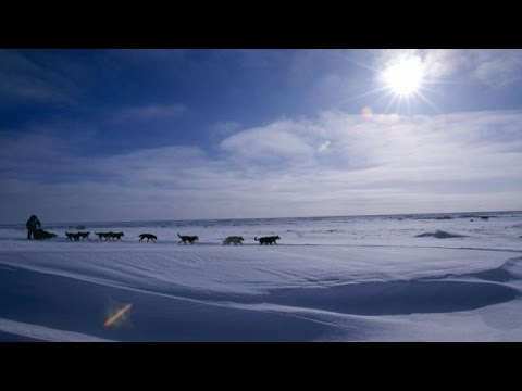 Thanks To Some Shipments Of Snow, Alaskan Iditarod Dog Sled Race Is On - Newsy