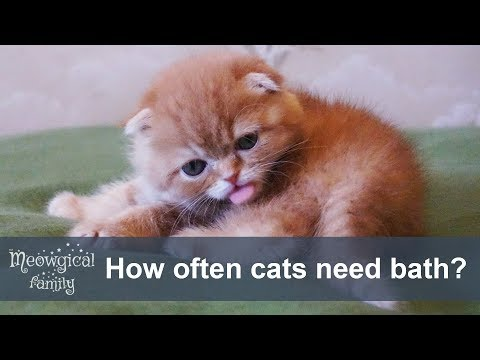 How Often Should I Bath My Cat Or Sphynx Cat?