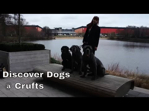 Discover Dogs at Crufts 2018 - The Neapolitan Mastiff Breed Stand Vlog #8