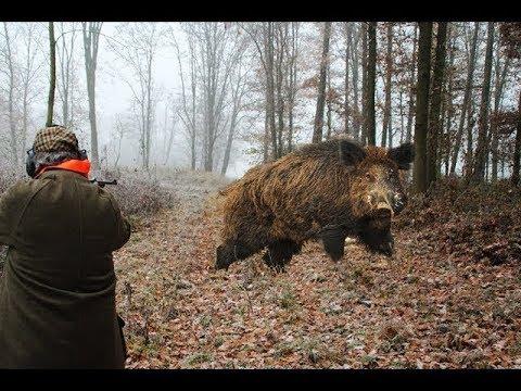 Top 10 Slow Motion Shots ever  საუკეთესო სროლის მომენტები  Wild Boar Hunting