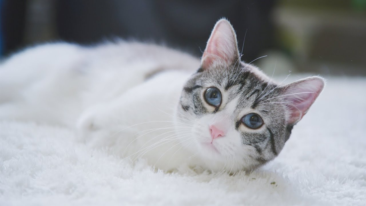 Cat Born Without Front Legs Announces Meal Time In The Most Adorable Way