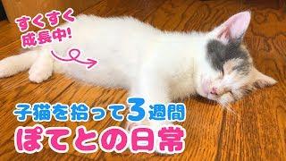 子猫を拾って3週間ぽてとの日常 thumbnail
