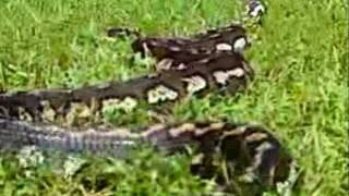 Potty Trained Snake (no Different Than A Dog Or Cat)