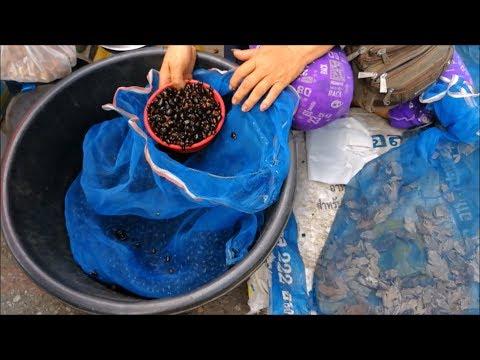 Laos food in thai laos market  - Amazing food in Asian street food