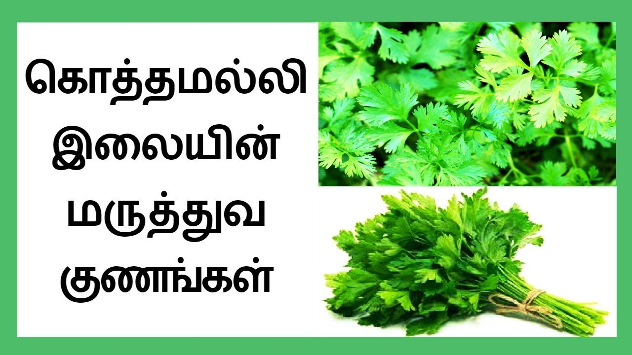 health benefits of coriander leaves in tamil