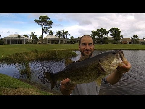 Bass fishing florida golf course pond dec jan youtube for Buy bass fish for pond