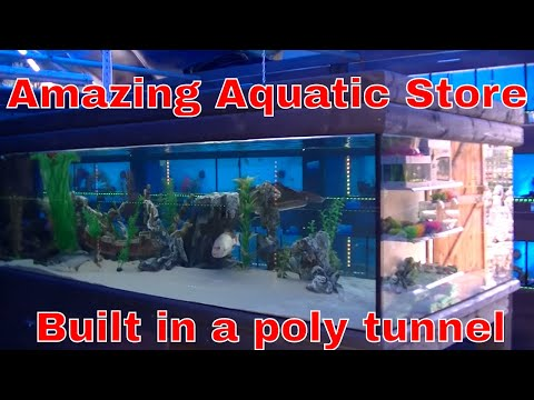 Tropical Fish Store Built In A Poly Tunnel Final Results !!!