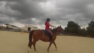 Travail de la mise en place à cheval