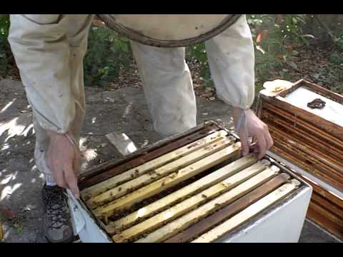 Evaluating a new hive from a swarm
