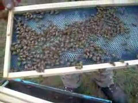 Beekeeper in Oregon- Honey Tree Apiaries