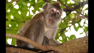 Monkey funny videos / monkey playing / funny videos