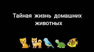 Тайная жизнь домашних животных...