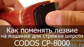 Как поменять лезвие на машинке для стрижки шерсти CODOS CP-8000(http://thezoo.ru/ Машинка для стрижки шерсти, машинка для стрижки собак, машинка для стрижки кошек, товары для грум..., 2013-11-12T16:11:08.000Z)
