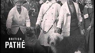 Irish Kennel Club Show Lner (1938)