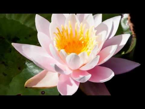 Music for wellbeing - Frantz Amathy - bien-être relaxation - guitare et violon - Anges