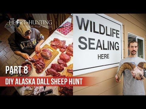 GETTING RAM SEALED & PROCESSING MEAT - DIY AK Dall Sheep Hunt (Part 8 Of 8)