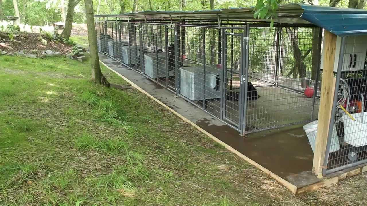 Commercial Dog Kennel Drainage Ideas