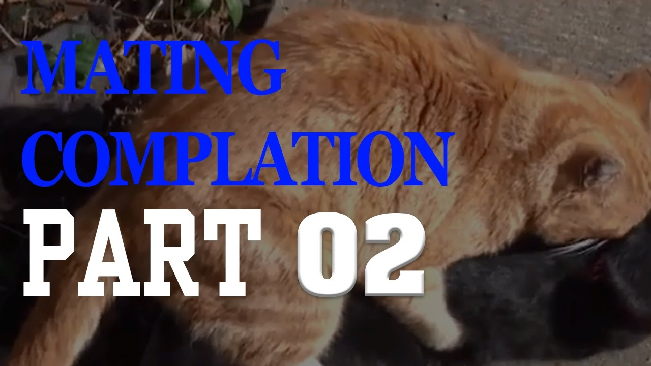 WILD ANIMALS MATING COMPILATION 2017 Season 2,Cat,Cow,Dog,Goat,Horse