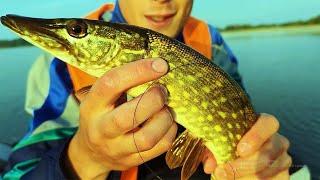 рыбалка на кружки летом бешеный клев щуки полтора часа 6 щук 2021 в Беларуси