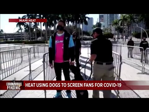 Dogs-will-sniff-Miami-Heat-fans-for-COVID-19-before-games