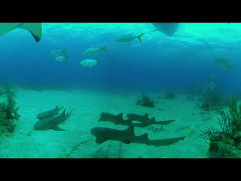 Bahamas Stuart Cove's Shark & Diving Experience in Virtual Reality 360 Video