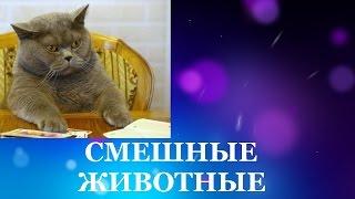 Смешные животные. Смотреть бесплатно смешные кошки