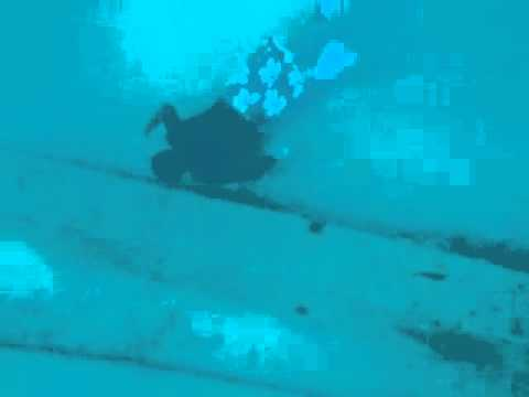 S.T. and BAP dive the crane wreck 35'