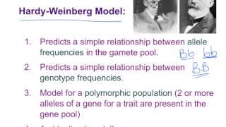 Bio 10.6 Population Genetics