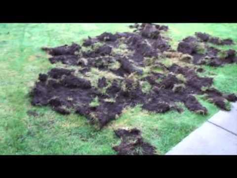 Nasty Raccoons Attack My Backyard!