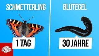 Wie lange leben diese Tiere? (Teil 3)