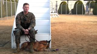 Military Working Dogs Help The Military Police Force Aboard Mcas Iwakuni