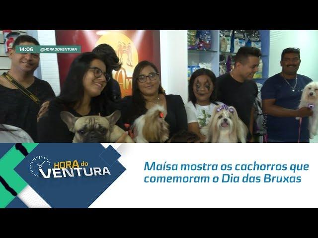 Maísa mostra os cachorros que comemoram o Dia das Bruxas - Bloco 01