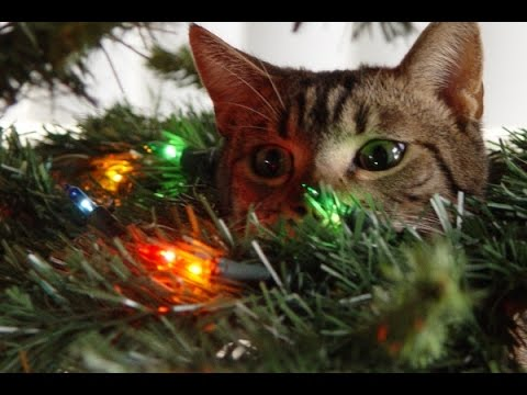 cats in christmas tree edition compilation ii funnybobo youtube. Black Bedroom Furniture Sets. Home Design Ideas