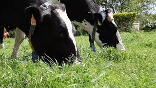 L'alimentation des vaches expliquée par Roland