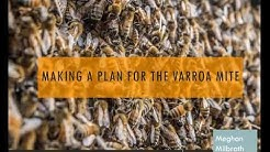 Making A Plan for the Varroa Mite