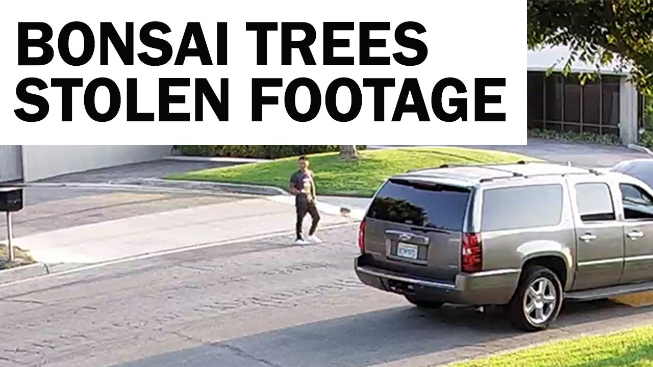 Stolen Bonsai Trees Follow Up - Thank you for the Support