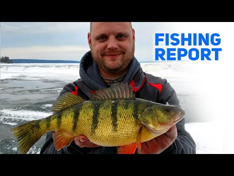 Ice Fishing Is On Up In Alpena! - Fishing Report