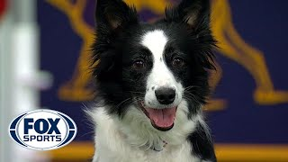 Watch 5 of the best WKC Dog Show moments to celebrate National Puppy Day | FOX SPORTS