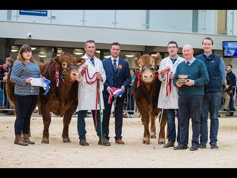 Limousin Sale Carlisle (prices 10,000 - 70,000 gns) October 14th 2017
