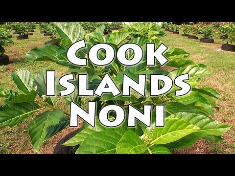 Cook Islands Noni
