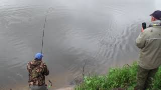 рыбалка хвоенск амур